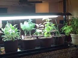 growing plants indoors with artificial light indoor kitchen herb container garden and seedlings growing under led