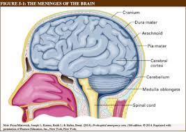Floor Of The Cranium N1681 Ebooks 16