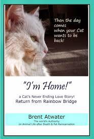 pet prayer cats rainbow bridge poem l cat heaven l cat l pet loss cat