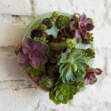 Wall Hanging Planters by Best 25 Succulent Wall Planter Ideas On Pinterest Succulent