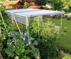 build a shelter for growing tomatoes grow tomatoes plants and