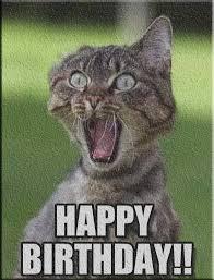 Grumpy Cat Meme Happy Birthday - grumpy birthday meme birthday best of the funny meme