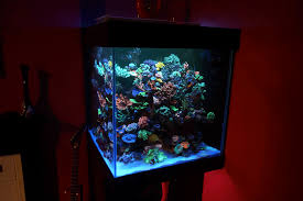 beautiful cube reef tank from scotland atlantik v4 upgraded u2022orphek