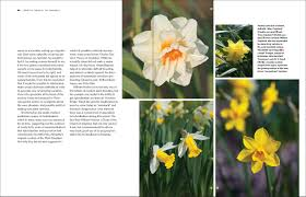Ideas For Daffodil Varieties Design Daffodil The Remarkable Story Of The World U0027s Most Popular Spring
