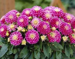 15 most popular summer flowers for your garden 1body1health
