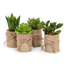 succelents amazon com abbott collection succulents in burlap wrap green