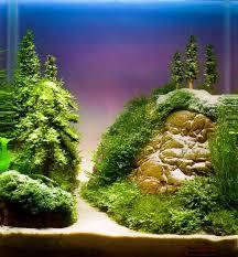 Aquascape Aquarium Designs 188 Best Aquariums Images On Pinterest Aquarium Ideas Aquariums