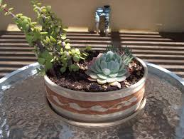succulents meaning the love of succulents napa master gardener column anr blogs