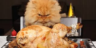thanksgiving pet photos meet garfi the angriest cat on the internet huffpost