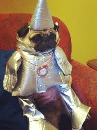 Pug Halloween Costume 14 Cute Animals Images Animals Happy