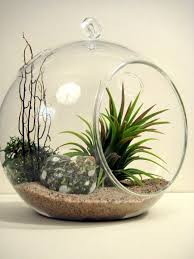 3pcs set blown glass hanging terrarium kits airplant orb