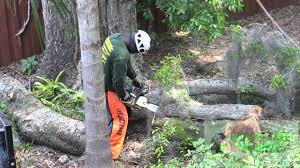 tree service tree work tree companies central florida winter park