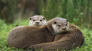 Vermont wildlife images Petition vermont fish wildlife board vermont 39 s otters need jpg