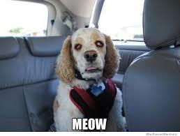 Stoned Dog Meme - stoned doggie says meow stoner dog weed memes weed memes