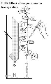 Lab Bench Transpiration Unbiology7