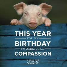 Birthday Animal Meme - social media fundraising resources mercy for animals