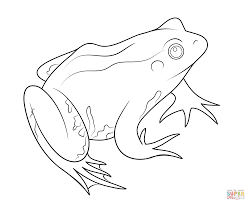 wood frogs coloring pages coloring