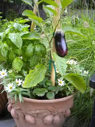 kitchen gardening ideas gardening kitchen home outdoor decoration