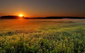 Sunset Orange by Sunrises And Sunsets Photo Gallery Miriadna Com