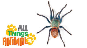 Spider Worksheets Spiders Animals For Children Kids Videos Kindergarten