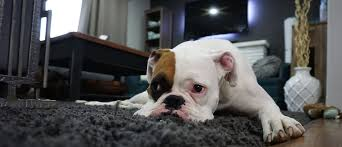 Best Pet Vaccum The Best Vacuum Cleaner For Pet Hair Smart Vac Guide