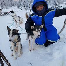 Dog Sledding Lyngen Alps Day Tour Tromso 2018 All You Need to