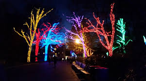 National Zoo Lights by Travelling The Antikrish