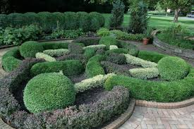 native plants for hedging growing boxwood tips for caring for boxwood plants