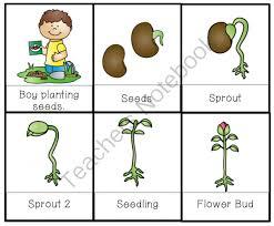 18 life cycle of a pumpkin worksheets kindergarten 16 best