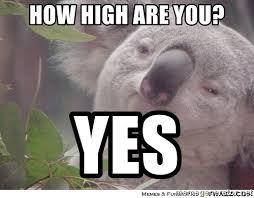 Koala Meme Generator - high koala meme koala best of the funny meme