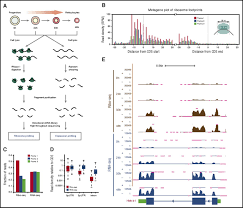 widespread and dynamic translational control of red blood cell