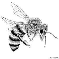 hand drawn bee sketch in black and white vector illustration