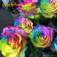 small rainbow rose seeds 100 seeds pack outdoor plants wild