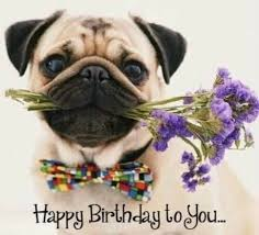 Happy Birthday Pug Meme - 242 best happy birthday images on pinterest
