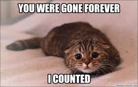 Sad Kitten Meme - were gone forever