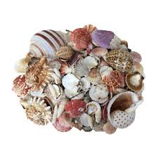 assorted seashells find the u s shell assorted shells at