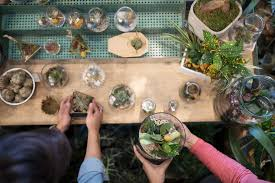 10 great terrarium plants