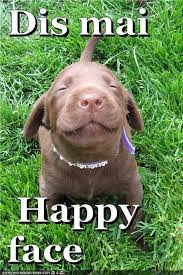 Super Happy Face Meme - 91 best dog memes images on pinterest doggies funny animal