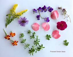pressed flowers easy pressed flower gifts your easy garden
