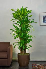 28 best indoor plants ideas images on pinterest