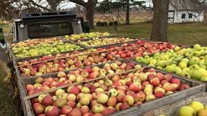 apple picking on long island guide