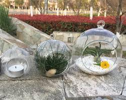 plant terrariums hanging succulent planters glass orb terrariums
