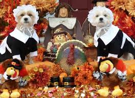 clintoncohumanesociety org happy thanksgiving