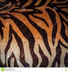 seamless animal print royalty free stock photography image 11954167