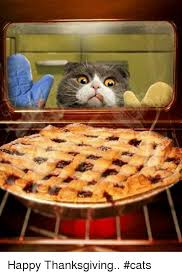 Thanksgiving Cat Meme - や the happy thanksgiving cats meme on me me