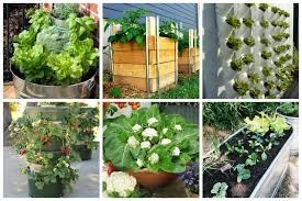 Container Vegetable Gardening Ideas Container Gardening Archives Ideal Me