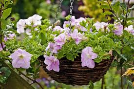 flowers for gardening planting home outdoor decoration