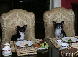 dogs at dinner table dog dining table dining room ideas