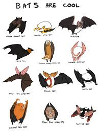 bat education outdoors