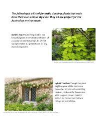 Plants For Pergolas by Plants For Pergolas Ss